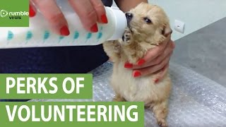 What it's like to volunteer at a vet's office
