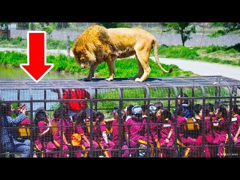Зоопарк, где в клетках посетители, а животные свободны