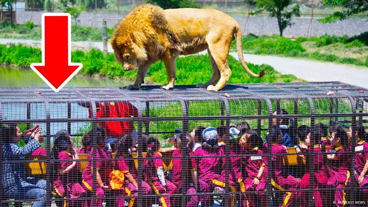 Зоопарк, где в клетках посетители, а животные | смотреть смешной фильм про животных