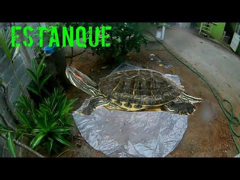 Como hacer un estanque para tortugas casero for Estanque tortugas casero