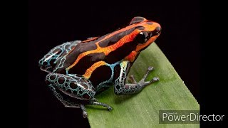 The Most Poisonous Animals In The World with Mike Trenche