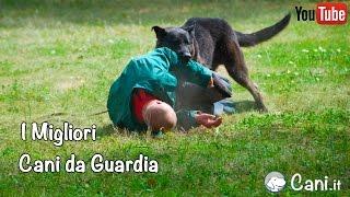 I Migliori Cani da Guardia