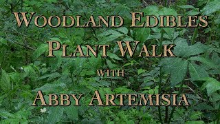 Woodland Edibles Plant Walk with Abby Artemisia