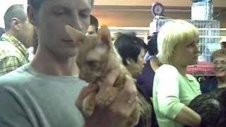 выставка кошек 2009 год  Н.Новгород ( архив)