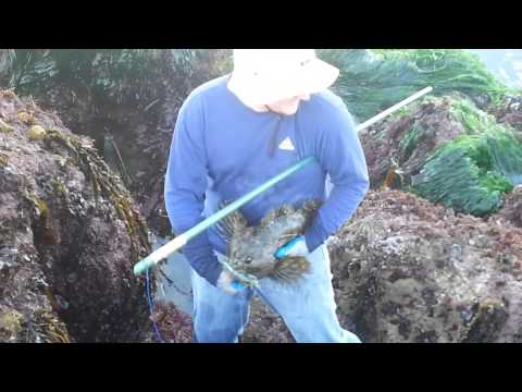 Poke Pole Fishing VAFB
