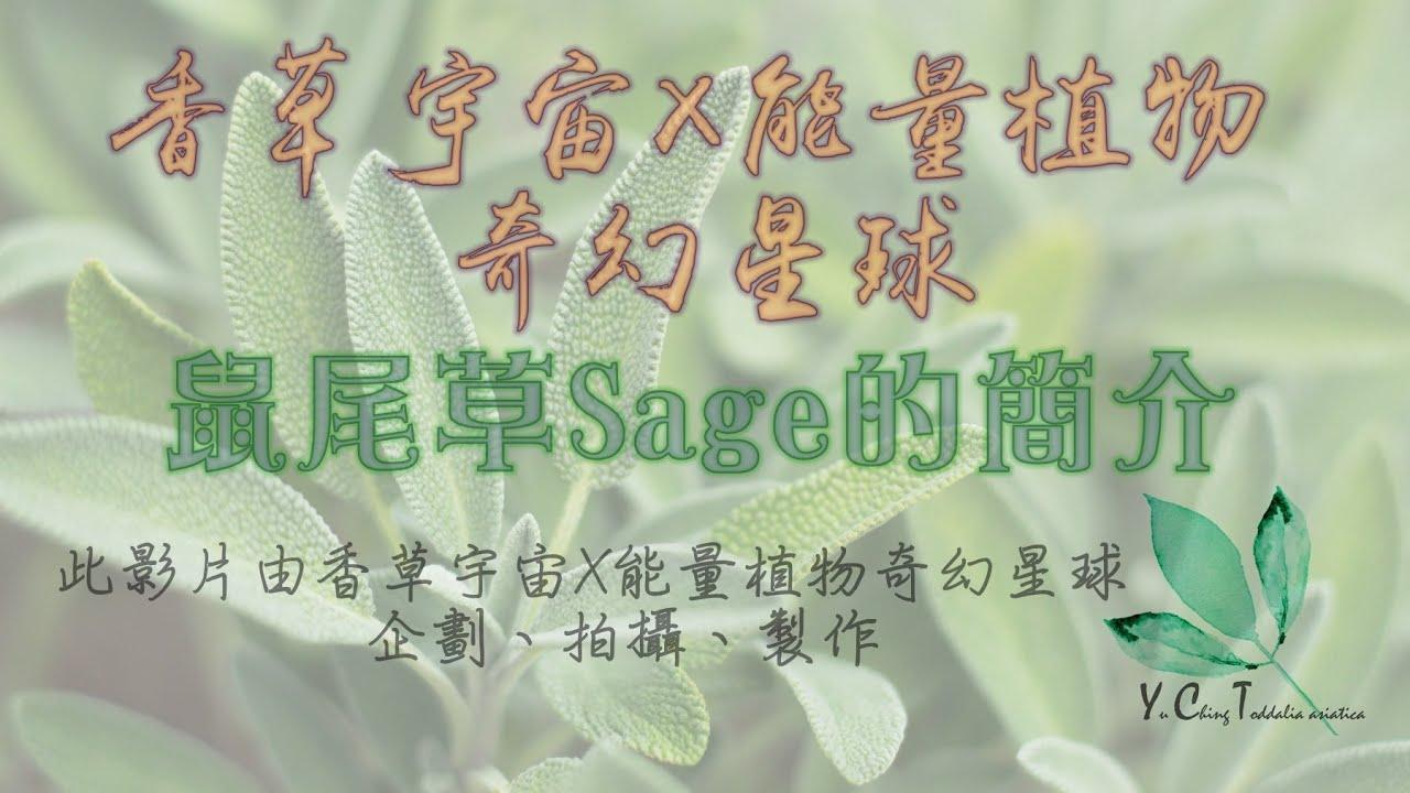 2020年香草宇宙X能量植物奇幻星球>>鼠尾草Sage的簡介的基礎簡介!