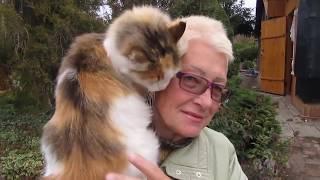 Кошка Кэти хочет ласки и внимания. Домашние животные