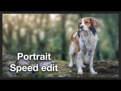 Kooikerhondje Portrait   Photo Manipulation   Photoshop - Speed Edit