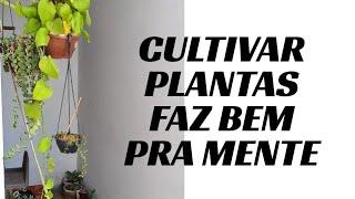 3 Plantas Ornamentais Lindas Para Iniciantes em Cultivo