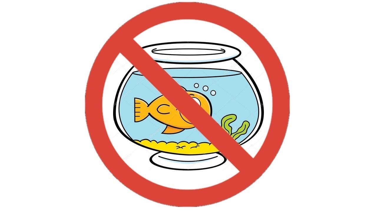 Novas Leis colocam em risco o aquarismo brasileiro ?
