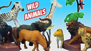 Toy Wild Animals Safari Zoo Collection and Fun Facts For Kids