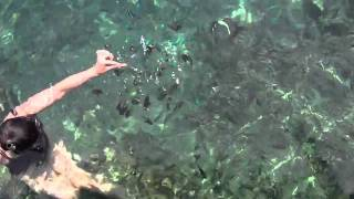 Dreams Do Come True: Feeding Fishes Outside Our Over-water Bungalow In Moorea, South Pacific