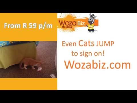 Cats Jumping at Wozabiz Hosting