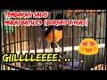 Murai F Borneo X Nias Sadis  Mp3 - Mp4 Download