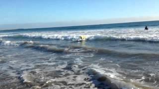 Dog surf Thumbnail