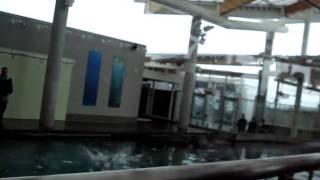 Aquario 060