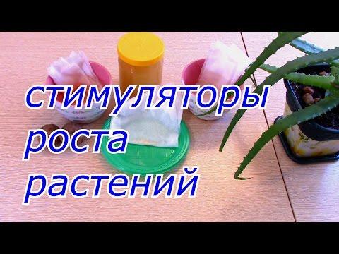 Янтарная кислота стимулятор роста для цветов