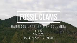Fossil Clams - Harrison Lake - Site 2