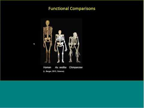 Webinar: Using Musculoskeletal Modeling to Study Human Bipedalism Evolution