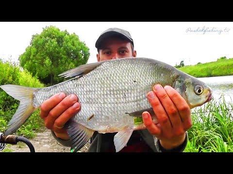 Пахра,, Рыбалка на Фидер Лещ приплыл на корм