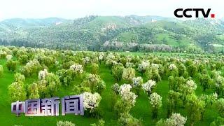 [中国新闻] 新疆伊犁:天山深处30多万亩野果林风景如画 | CCTV中文国际
