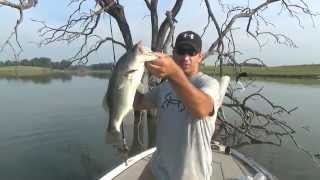 Using Soft Plastic Lizards for Largemouth Fishing