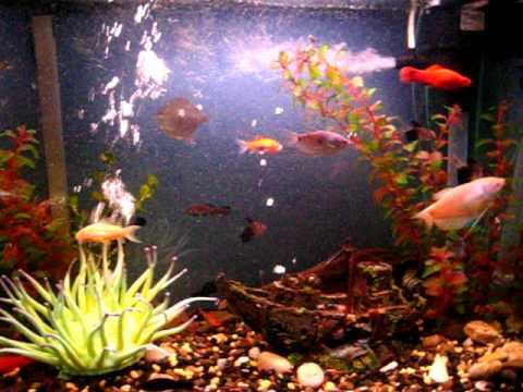 Acuario de peces tropicales youtube for Red para peces de acuario