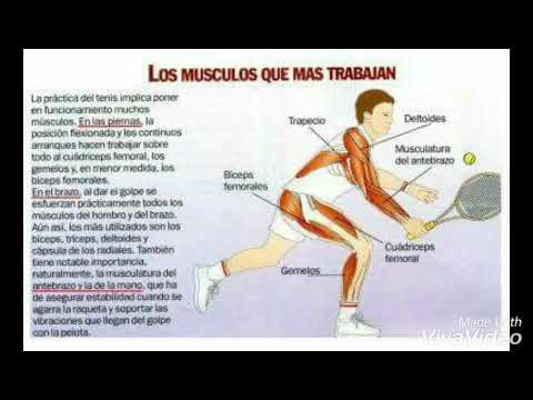 La anatomía del tenis - YouTube