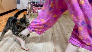 仲良く遊んでたのに突然飼い主の足を攻撃してしまった猫w