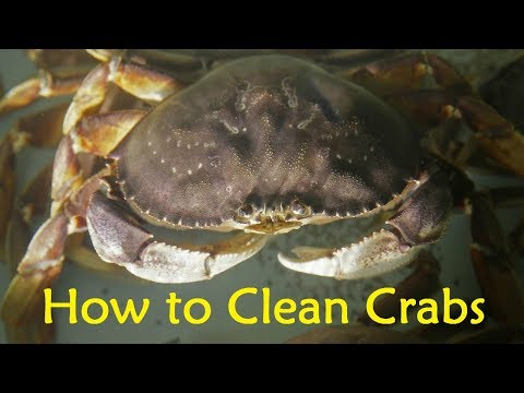 How to Clean Crabs Before Cooking