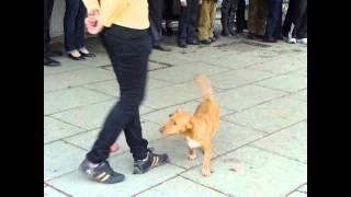 Трюки беспородной собаки в Симферополе