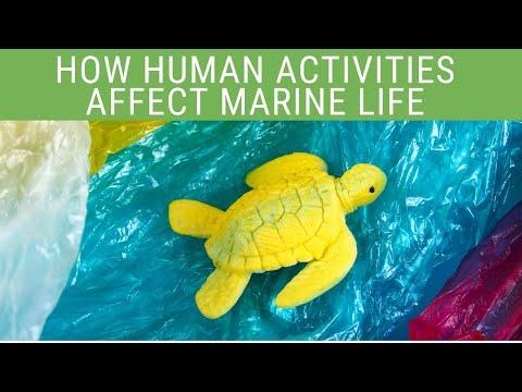 How Human Activities Affect Marine Life (2020) | EcoBravo