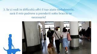 Giornata Nazionale del Cane Guida, Unione Ciechi e Ipovedenti: «La libertà a sei zampe»