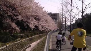 Sakura Drops in Suita