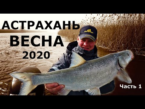 Рыбалка в Астрахани весной 2020 Часть 1. Ловля судака и жереха на Нижней Волге