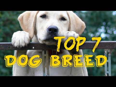 top-7-dog-breeds-in-india||-7-observer-||-first-time-dog-owner-||-best-pet-dog