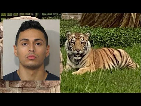 Houston police still looking for tiger and owner who was out on bond on a 2017 murder charge