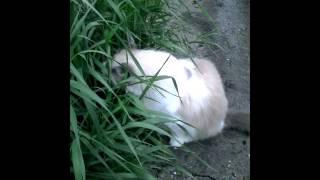 Каую траву едят коты
