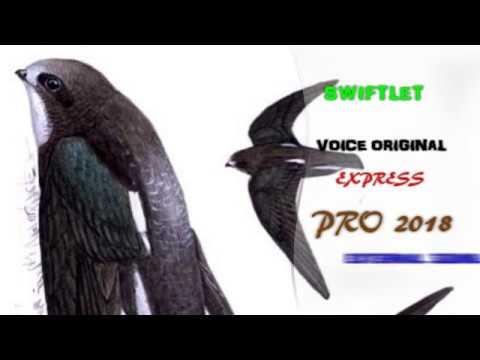 PANGGIL KLIMAX V.01 2018 - Suara Luar Burung Walet Sangat Recomended  | HQ Swiftlet Pro 2018