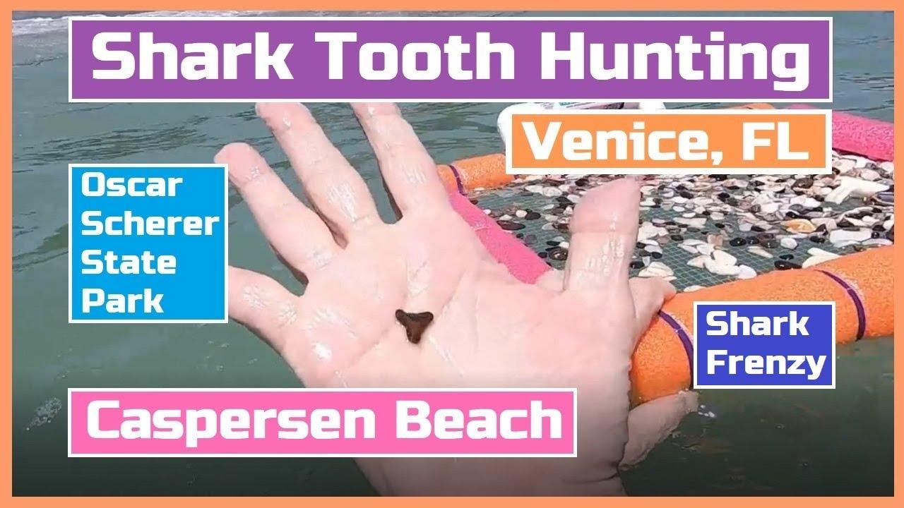Shark Tooth Hunting at Caspersen Beach in Venice, Florida. Oscar Scherer State Park. SHARK FRENZY!