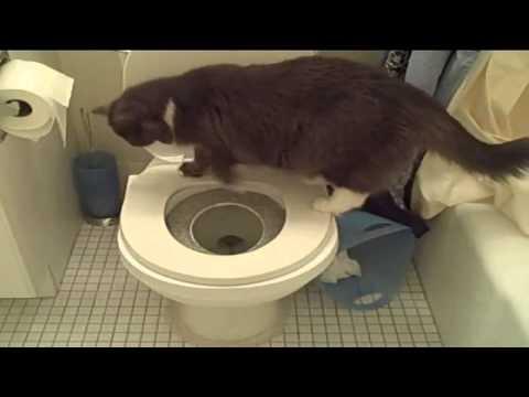 Коты Vs Туалетная Бумага