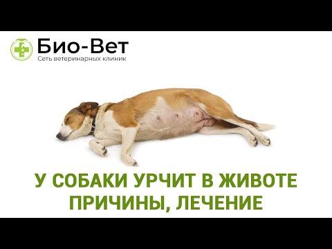 У собаки болит живот причины