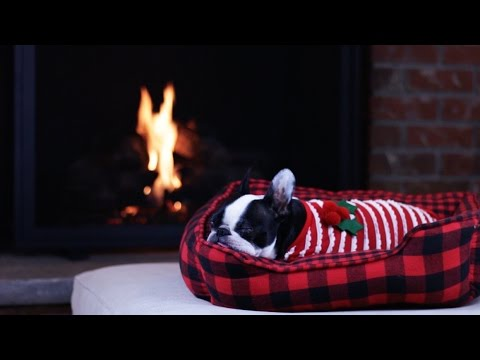 Boston Terrier Yule Log  - Rover.com