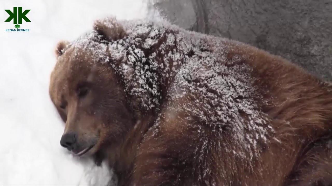 Kış Uykusuna Yatan Hayvan Uyandırılabilir mi?