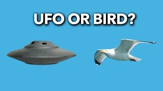 Your UFO Photo May Just Be A Bird