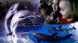 Дельфинарий! Двойняшки впервые увидели настоящих дельфинов! Видео для детей.