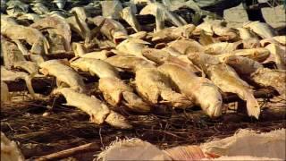 Vu du Ciel - S01E03 - 5 - Archipel des Bijagos, Guinée Bissau & chiffres