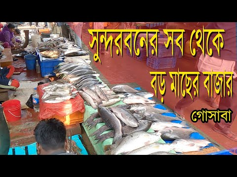 The largest fish market in the Sundarbans, Gosaba, West Bengal, India