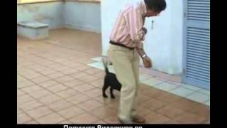 Бесплатные уроки по дрессировке собаки дома - www.komne.com
