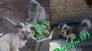 Дружба домашних питомцев кота Тошки и собаки Фильки